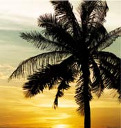 Palm tree against sunset
